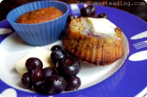 You Can't Quit Life – Coconut Flour Blueberry Muffins