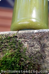 Swamp Juice: Low-Tech Green Juicing